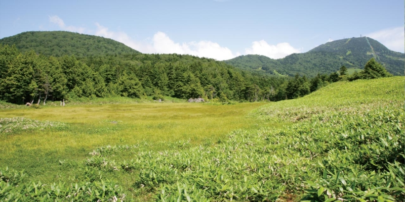 前山湿原と鉢山・横手山